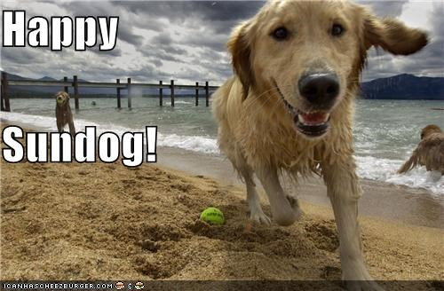 ball,beach,fun,golden retriever,happy sundog,having fun,ocean,sunday,Sundog,swimming,water