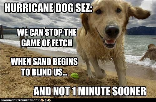 HURRICANE DOG SEZ: WE CAN STOP THE GAME OF FETCH WHEN SAND BEGINS TO BLIND US... AND NOT 1 MINUTE SOONER