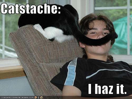 cat i has mustache resemblance tail - 5134932992