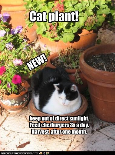 NEW! Cat plant! keep out of direct sunlight. Feed chezburgers 3x a day. Harvest after one month.