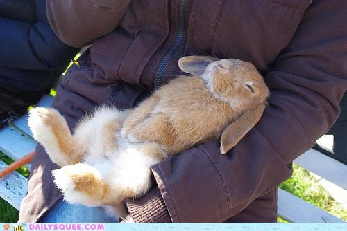 bunny color ginger gingersnaps Hall of Fame happy bunday nap napping naps noms orange pun rabbit sleeping - 5135284736