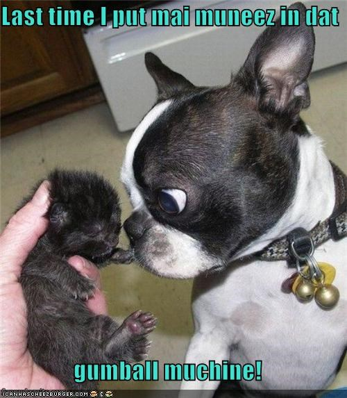best of the week boston terrier cat kitten omg shocked surprised what is that - 5135395584