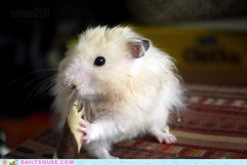 candy do want eating excited food hamster literalism omnomnom - 5135756288
