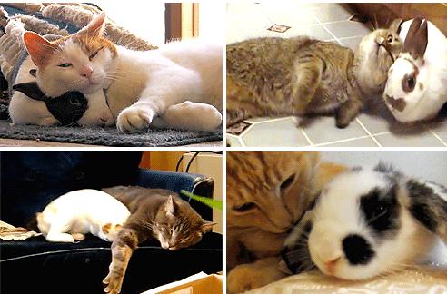 aww gifs cuddling Cats bunny - 5136133