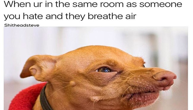 Funny Dog Memes - Dog Memes about being in the same room as someone you don't like