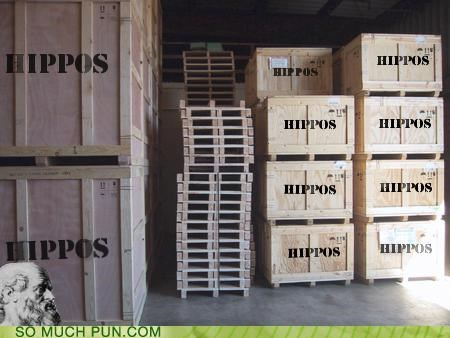 combination crates double meaning hippo hippocrates literalism lolwut portmanteau - 5136514560