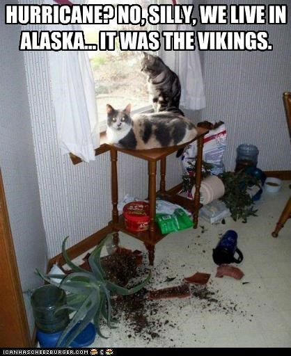 alaska borked broken caption captioned cat Cats excuse explanation hurricane live mess no reason silly vase vikings - 5136596736