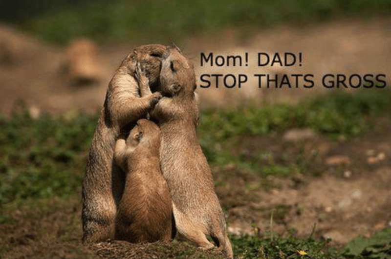 parenting memes of animals taking care of their young or lack thereof