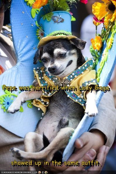chihuahua,clothes,clothing,costume,hat,lady gaga,outrageous,silly outfit