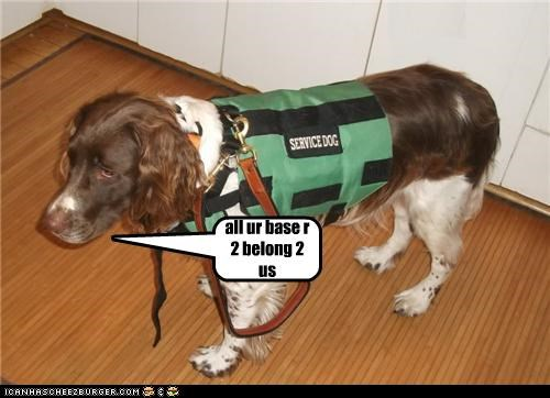 Cheezburger Image 5136804096