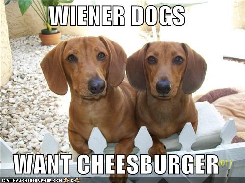 Cheezburger Image 5136980992
