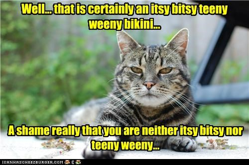 bikini,caption,captioned,cat,certainly,fat,insinuating,insult,itsy bitsy,shame,teeny weeny,that,well