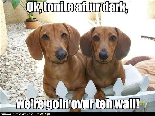 Ok, tonite aftur dark, we're goin ovur teh wall!