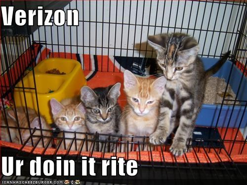 caption captioned cat Cats doing it right kitten signal strength verizon - 5137275904