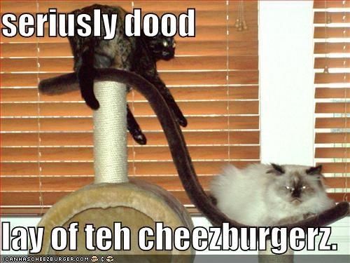 Cheezburger Image 5137345024