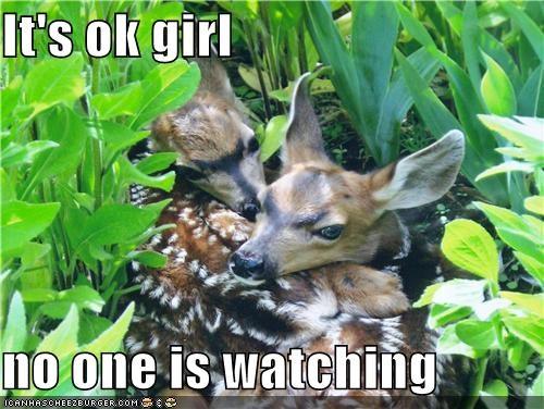 animals bushes creepy deer hiding I Can Has Cheezburger in public sex watching - 5137448448