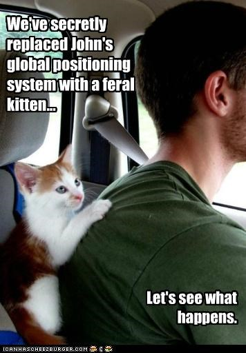 We've secretly replaced John's global positioning system with a feral kitten... Let's see what happens.