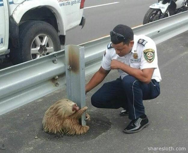 highway police rescue sloth - 5137925