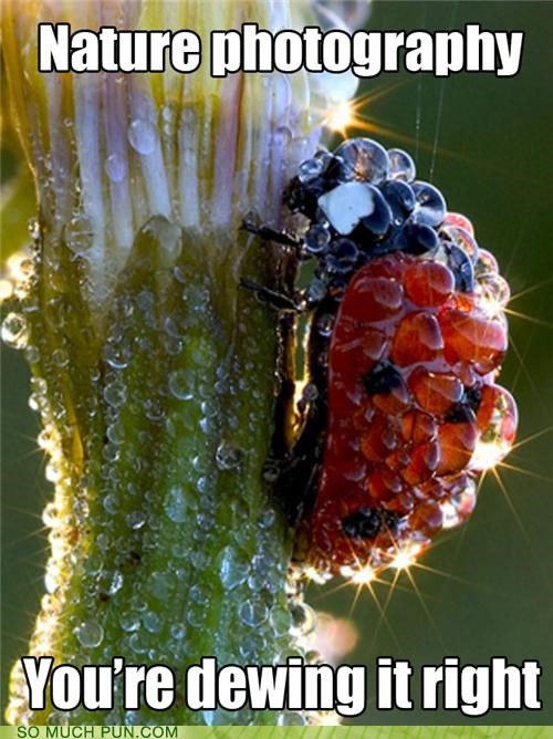 dew dewing do doing doing it right ladybug nature photography rain - 5138023168
