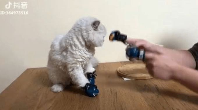 videos instagram cute Cats - 5138693