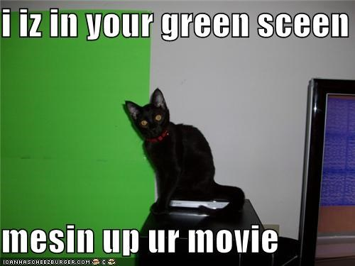 caption captioned cat green screen im-in-your meme messing Movie - 5138950656