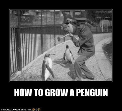 animals,grow,historic lols,penguins,water,watering can,wtf,zoo