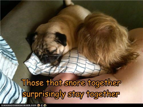 best friends,friends,human,nap,nap time,pug,sleeping,snore