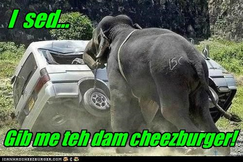 Cheezburger Image 5140238080