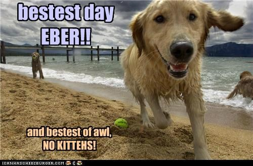 bestest day EBER!! and bestest of awl, NO KITTEHS!