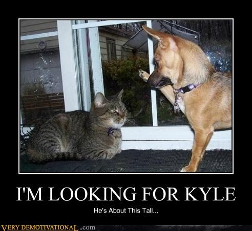 dogs hilarious kitty kyle wtf - 5140535296