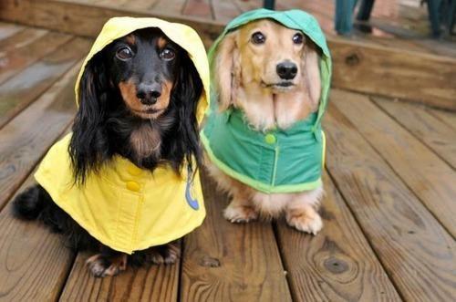 hurricane irene,Hurricanine,Sundog