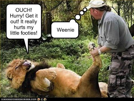 animals caretakers feet I Can Has Cheezburger lions pain paws whining wussy - 5140923904
