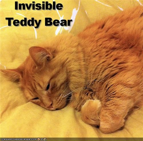 bear best caption captioned cat friend invisible tabby teddy - 5141046784