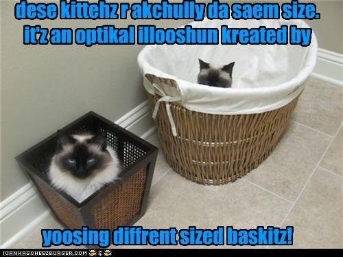 dese kittehz r akchully da saem size. it'z an optikal illooshun kreated by yoosing diffrent sized baskitz!