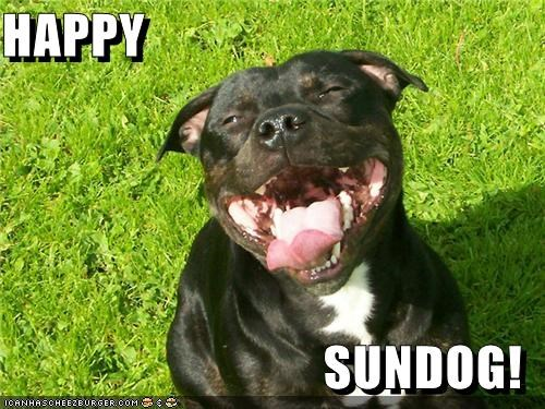 happy dog happy sundog outdoors pit bull pitbull smiling sunny day - 5141133056