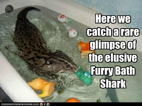 Here we catch a rare glimpse of the elusive Furry Bath Shark