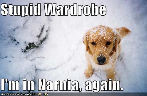 best of the week,golden retriever,narnia,outdoors,snow,wardrobe,winter