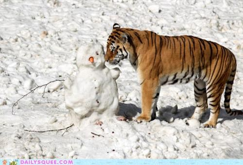 acting like animals child confused helping lolwut lost parent question separated snowman tiger - 5141538560