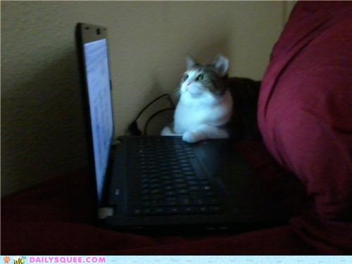 adorable,body,cat,example,keyboard,keys,laptop,message,oops,pressing,reader squees,skype,typing,warm