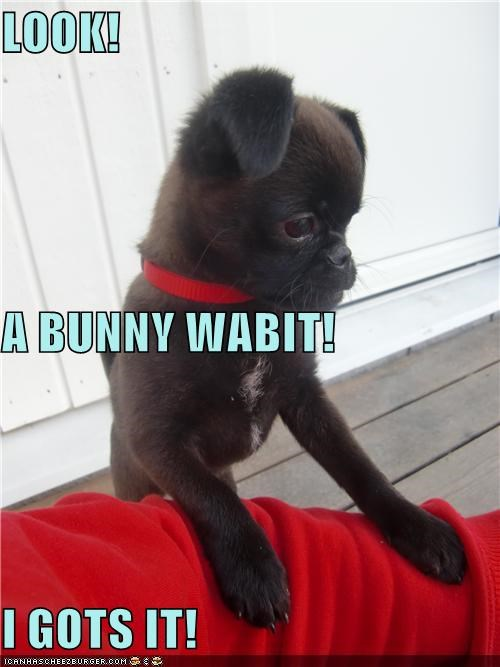 alert excited french bulldogs puppy rabbit