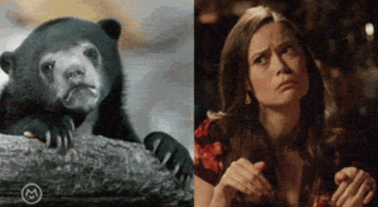 popular Memes imitation summer glau animals - 5143813
