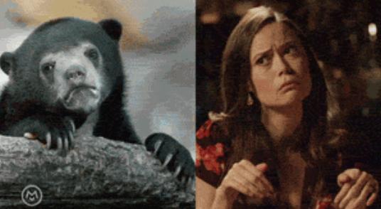 popular Memes imitation summer glau animals - 5143813