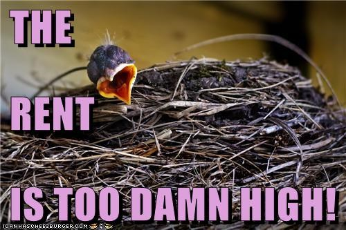 baby,bird,caption,captioned,damn,high,nest,rent,shouting,TLL,too