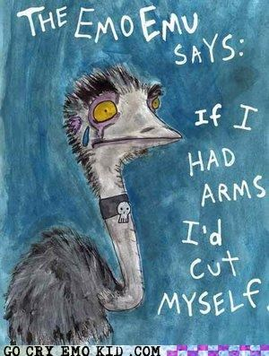 arms,birds,cut,emo,emu,puns,wings