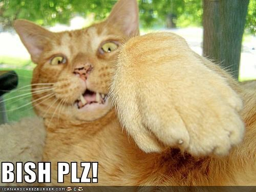 animals btch-please Cats I Can Has Cheezburger paws - 5144280832