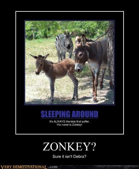 debra donkey hilarious zebra - 5144459008