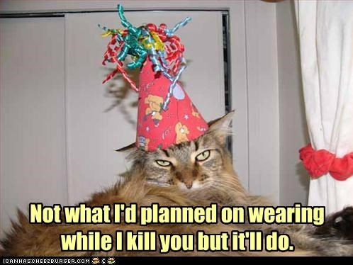 caption captioned cat good enough hat kill not outfit party hat planned wearing what