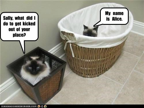 Sally, what did I do to get kicked out of your place? My name is Alice.