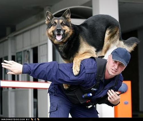 german shepherd happy dog police police and safety police dog police officer smiling - 5144770816