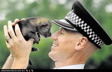 german shepherd goggie ob teh week police police and safety police dogs puppy - 5144828160